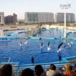 Delphinshow im Aquarium