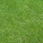 Der englischen Rasen des Camp Nou