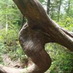 Regenwald auf Vancouver Island