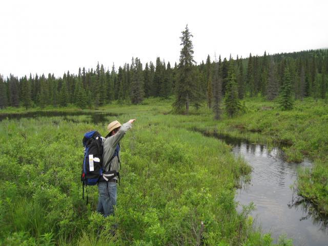"""""""Into the Wild"""" auf dem Weg zurück nach Anchorage"""