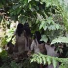 Kogis im Dschungel